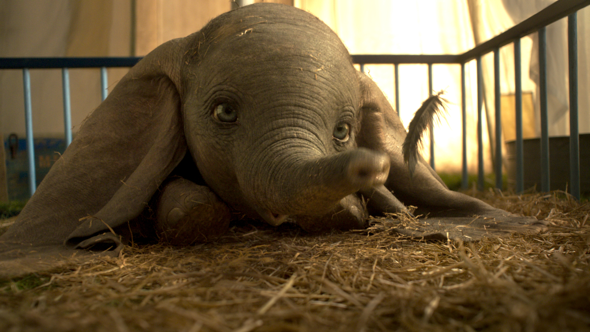 Dumbo | Kids Cinéma