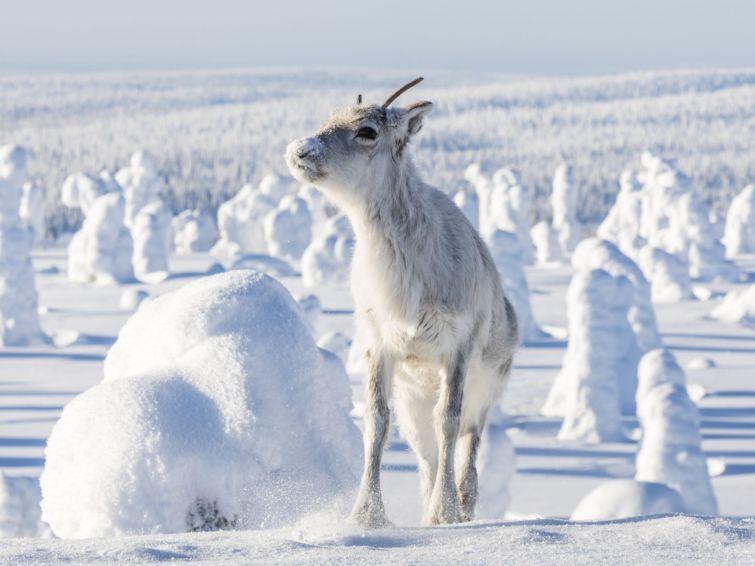 Aïlo: une odyssée en Laponie | Kids Cinéma