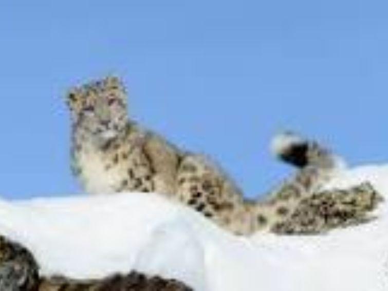 Mike   Rencontres Danse Cirque Théâtre Danse